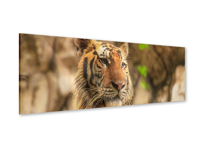 Acrylglasbild Panorama Tiger