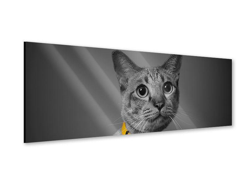 Acrylglasbild Panorama Katzenlady