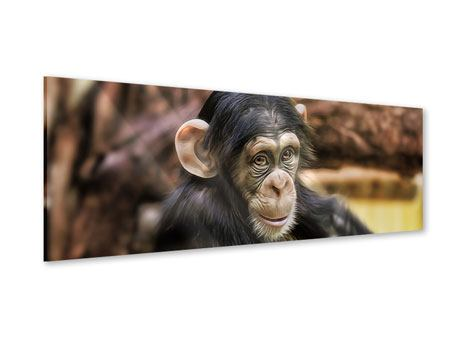 Acrylglasbild Panorama Der Schimpanse