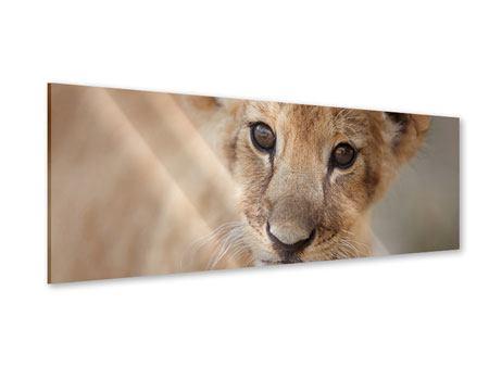 Acrylglasbild Panorama Löwenbaby