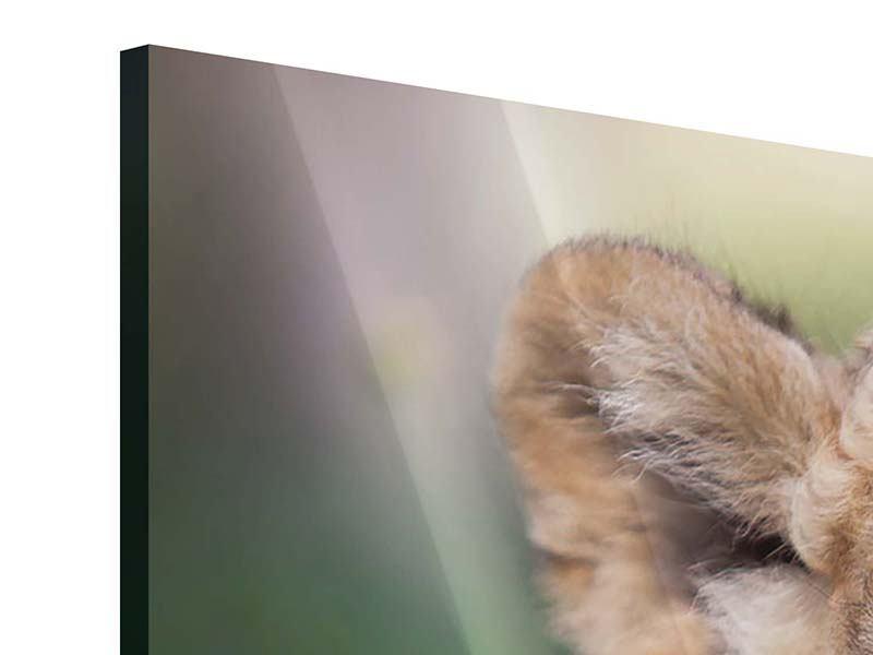 Acrylglasbild Panorama Das Löwenbabay