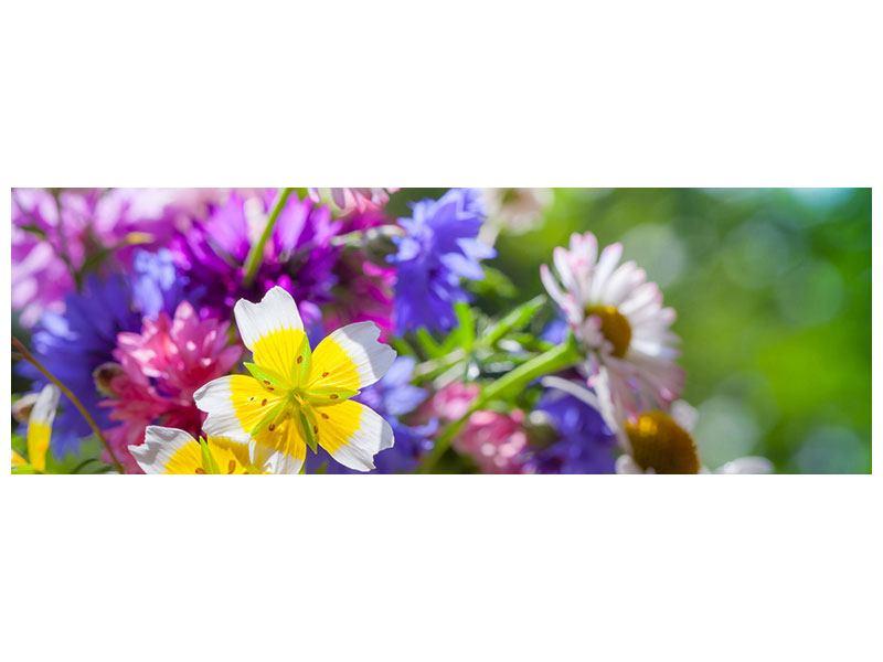 Acrylglasbild Panorama XXL Gartenblumen