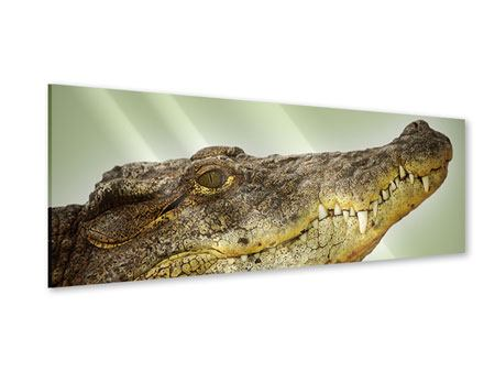 Acrylglasbild Panorama Close Up Alligator