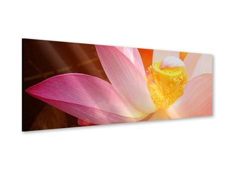 Acrylglasbild Panorama Close Up Lotus
