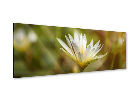 Acrylglasbild Panorama Lilien-Lichtspiel