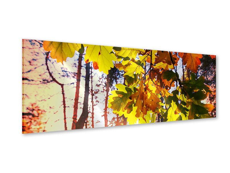 Acrylglasbild Panorama Herbst