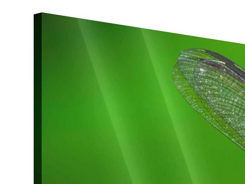 Acrylglasbild Panorama Die Libelle