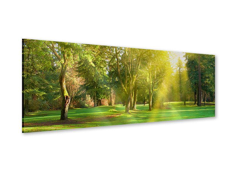 Acrylglasbild Panorama Im Park