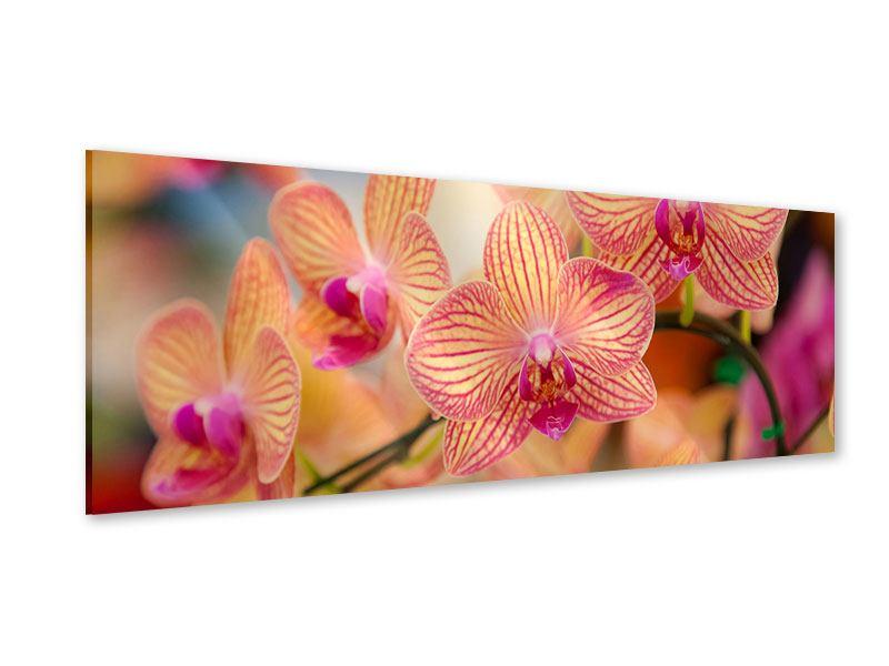 Acrylglasbild Panorama Exotische Orchideen