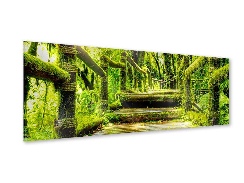 Acrylglasbild Panorama Moos