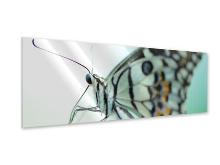Acrylglasbild Panorama Schmetterling XXL