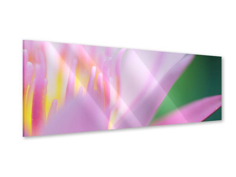 Acrylglasbild Panorama XXL-Lilie