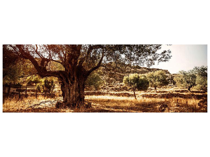 Acrylglasbild Panorama Olivenhain