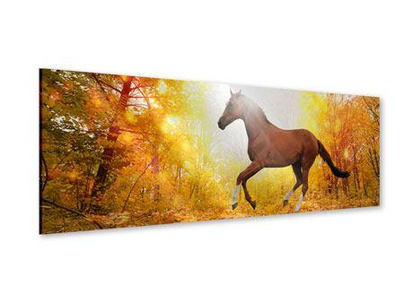 Acrylglasbild Panorama Vollblut im Herbstwald