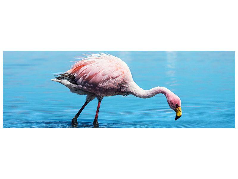 Acrylglasbild Panorama Der Flamingo