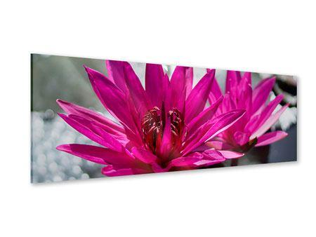 Acrylglasbild Panorama Seerosenduo in Pink