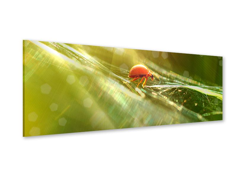 Acrylglasbild Panorama Marienkäfer im Sonnenlicht