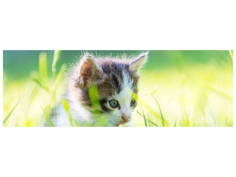 Acrylglasbild Panorama Kitten