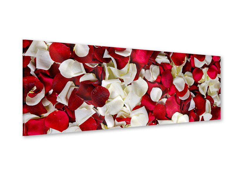 Acrylglasbild Panorama Rosenblätter