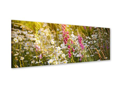 Acrylglasbild Panorama Sommerliche Blumenwiese