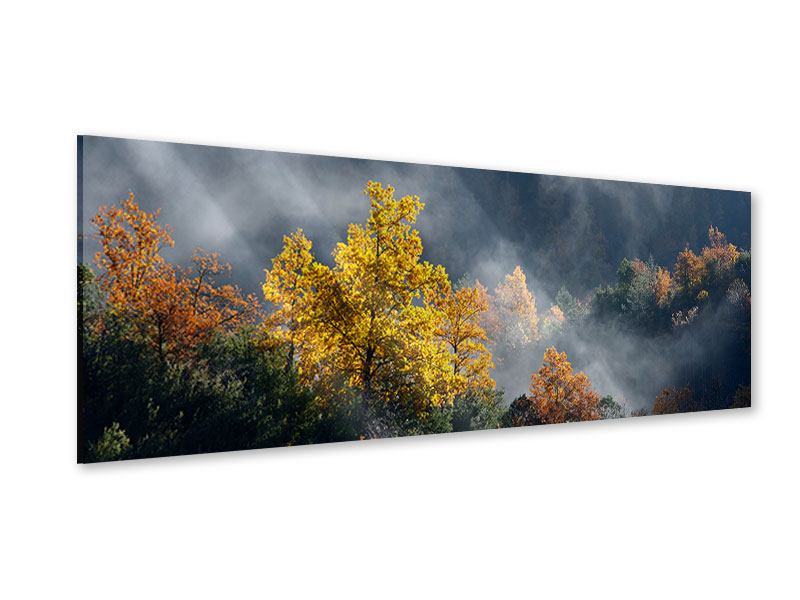 Acrylglasbild Panorama Mondscheinwald