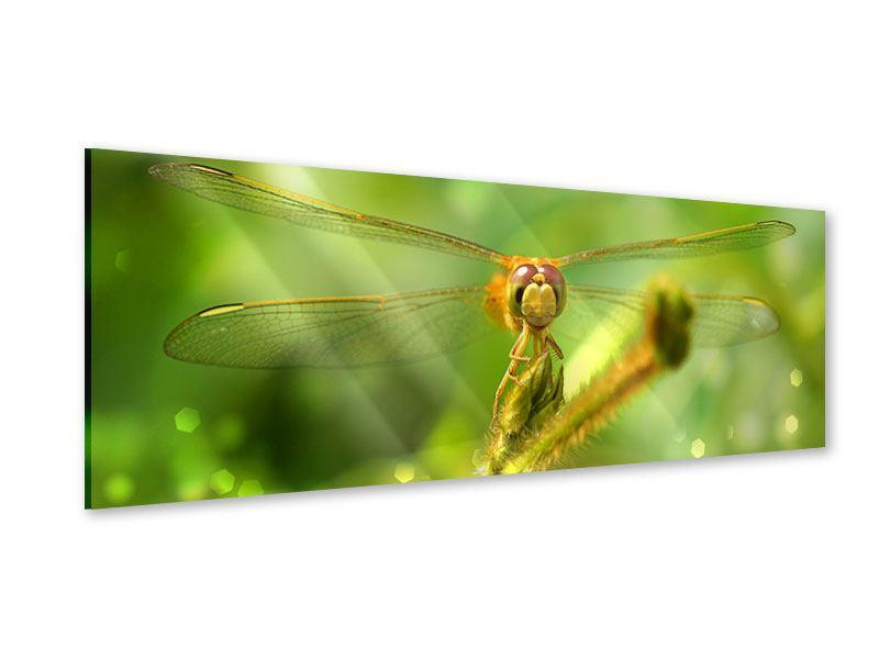 Acrylglasbild Panorama XXL-Libelle