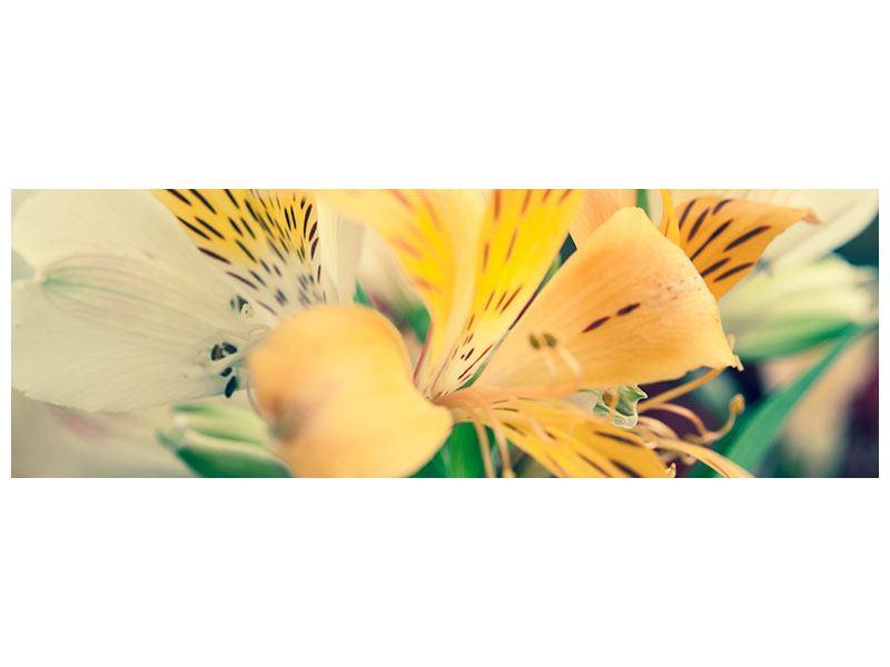 Acrylglasbild Panorama Tigerlilien