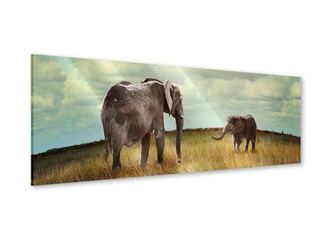 Acrylglasbild Panorama Elefanten und Feng Shui
