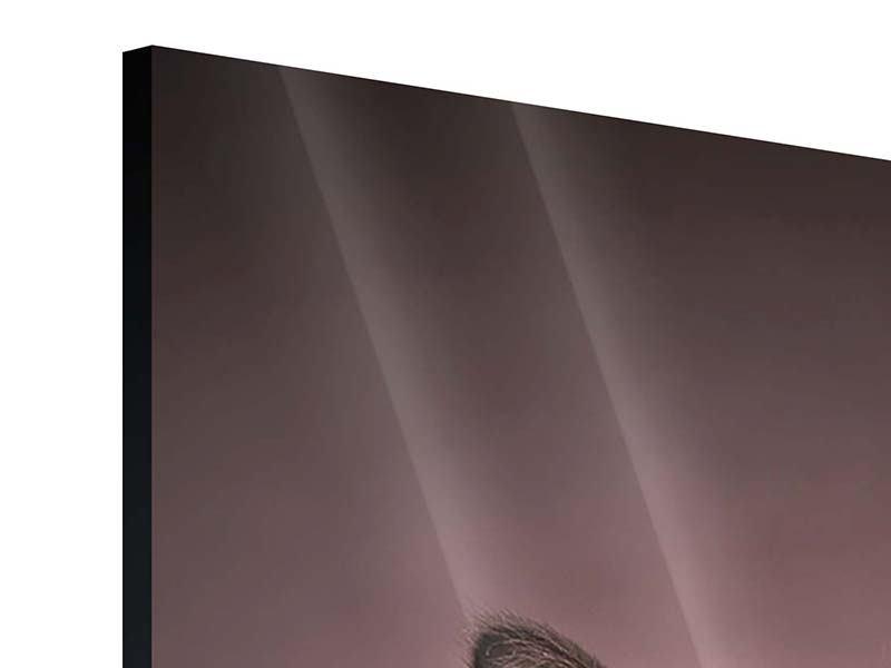Acrylglasbild Panorama Elegante Samtpfoten