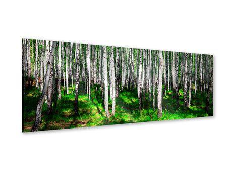 Acrylglasbild Panorama Sommerlicher Birkenwald
