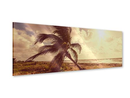 Acrylglasbild Panorama Die schiefe Palme