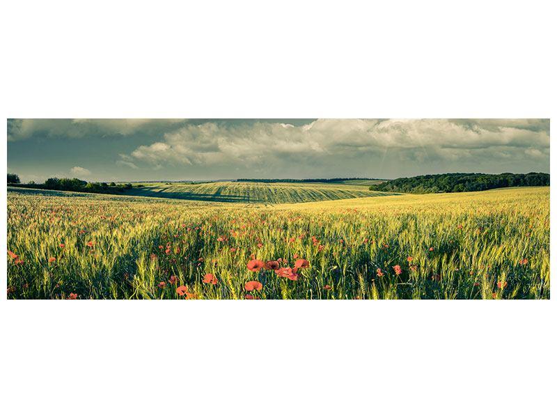 Acrylglasbild Panorama Der Mohn im Weizenfeld