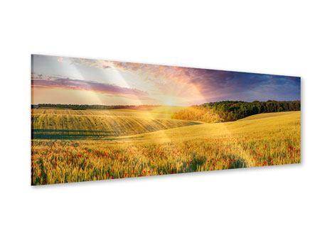 Acrylglasbild Panorama Ein Blumenfeld bei Sonnenaufgang