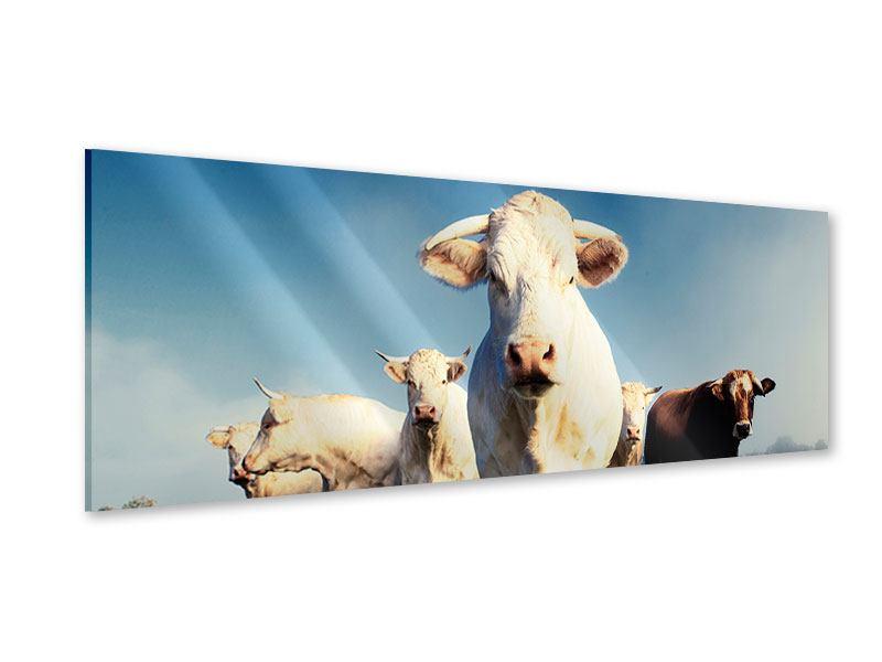 Acrylglasbild Panorama Kühe