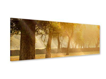 Acrylglasbild Panorama Romantik unter Bäumen
