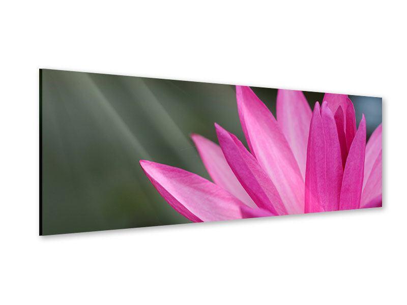 Acrylglasbild Panorama XXL Seerose in Pink