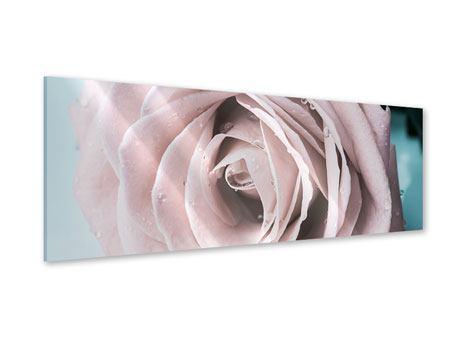 Acrylglasbild Panorama Pastellrose