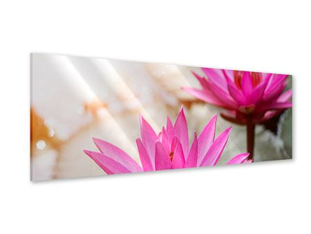Acrylglasbild Panorama Lotus-Duo