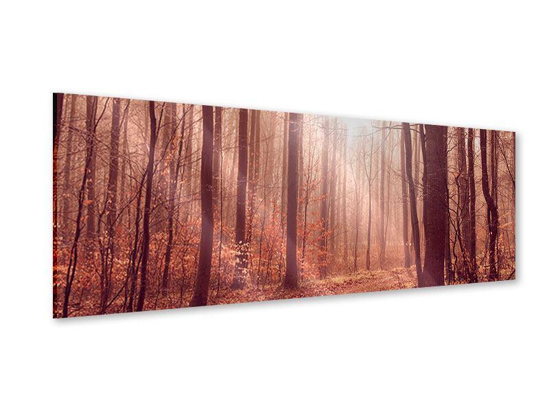 Acrylglasbild Panorama Sonnenuntergang im Herbstwald