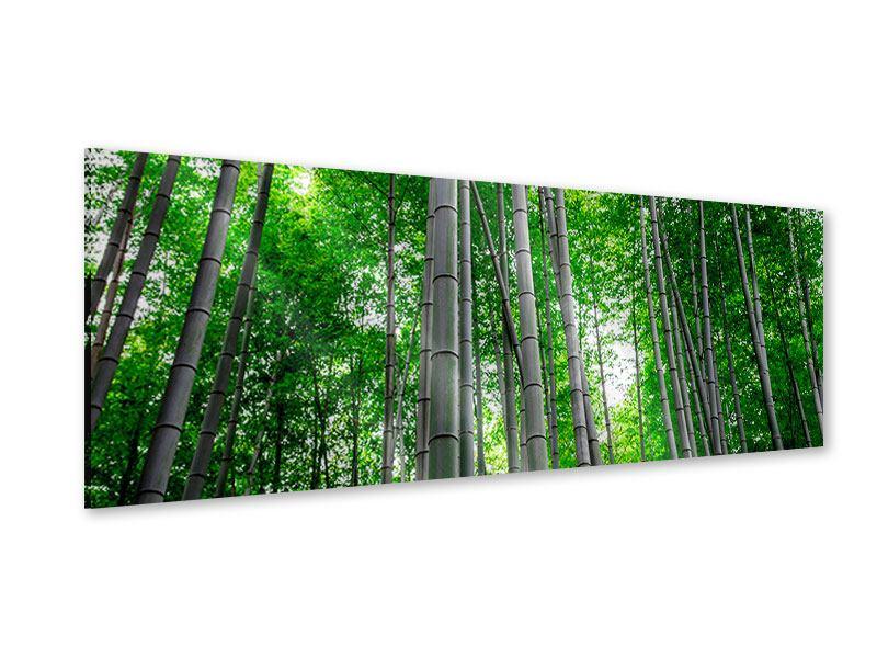 Acrylglasbild Panorama Bambuswald