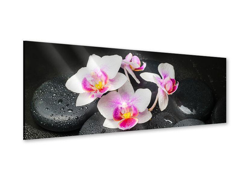 Acrylglasbild Panorama Feng-Shui-Orchidee Zen