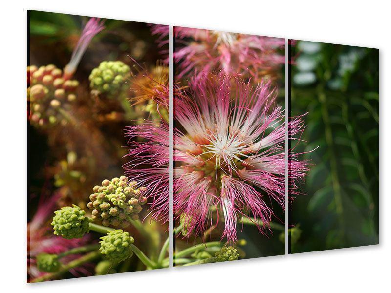 Acrylglasbild 3-teilig Die Regenbaumblüte