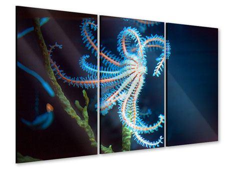 Acrylglasbild 3-teilig Aquarium
