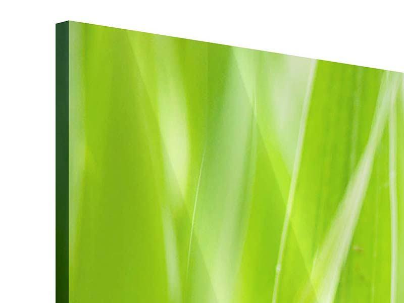 Acrylglasbild 3-teilig Gras XXL