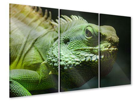 Acrylglasbild 3-teilig XXL Leguan