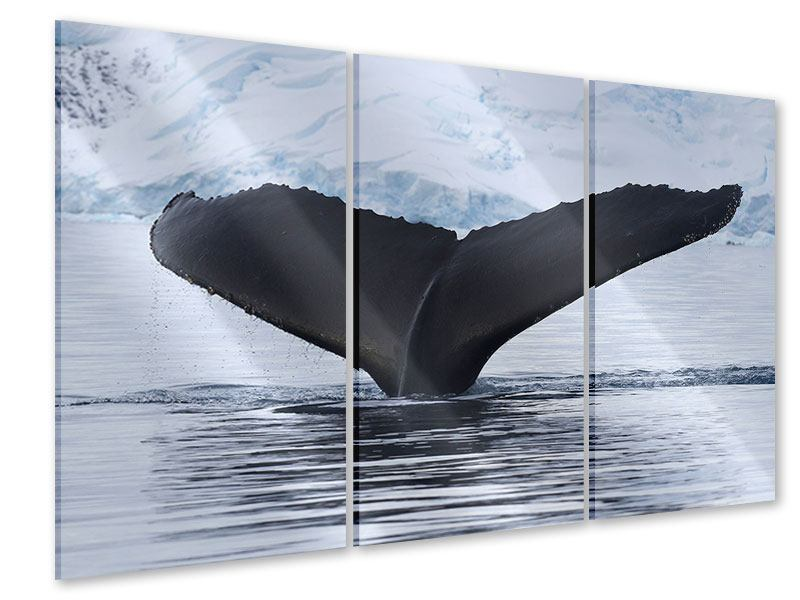 Acrylglasbild 3-teilig Der Buckelwal