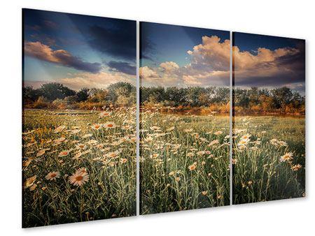 Acrylglasbild 3-teilig Die Wiesenmargerite am Fluss
