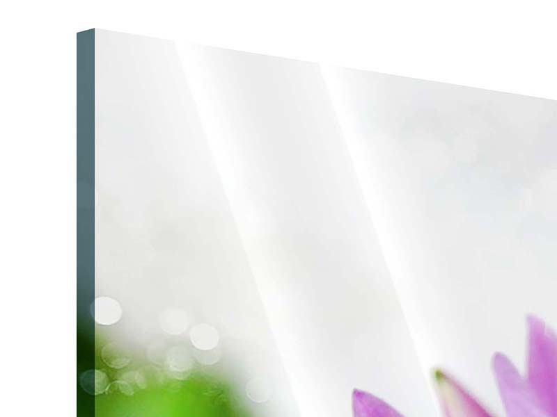 Acrylglasbild 3-teilig Die Lotus mit Biene