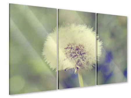 Acrylglasbild 3-teilig Die Pusteblume