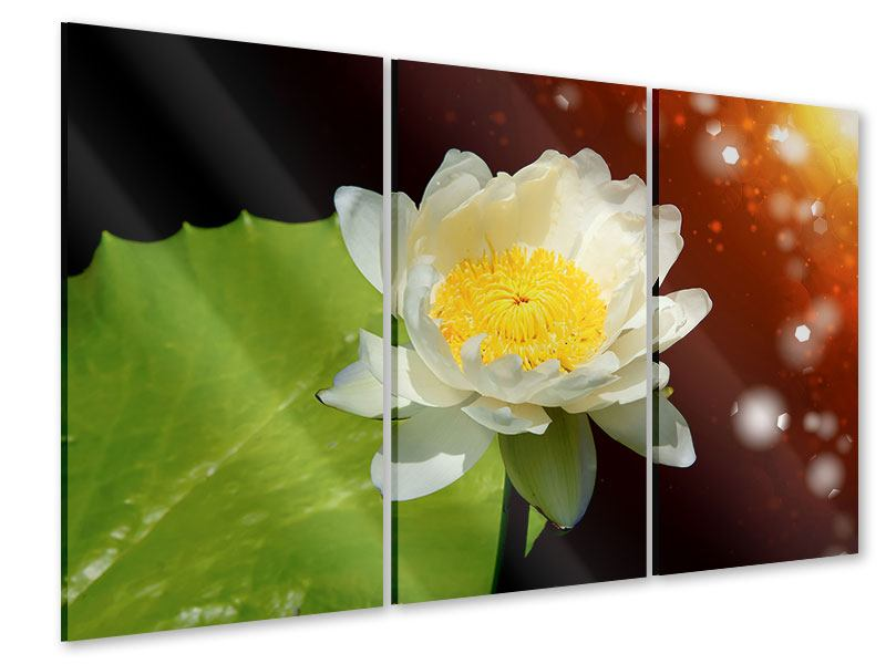 Acrylglasbild 3-teilig Seerose im Mondlicht